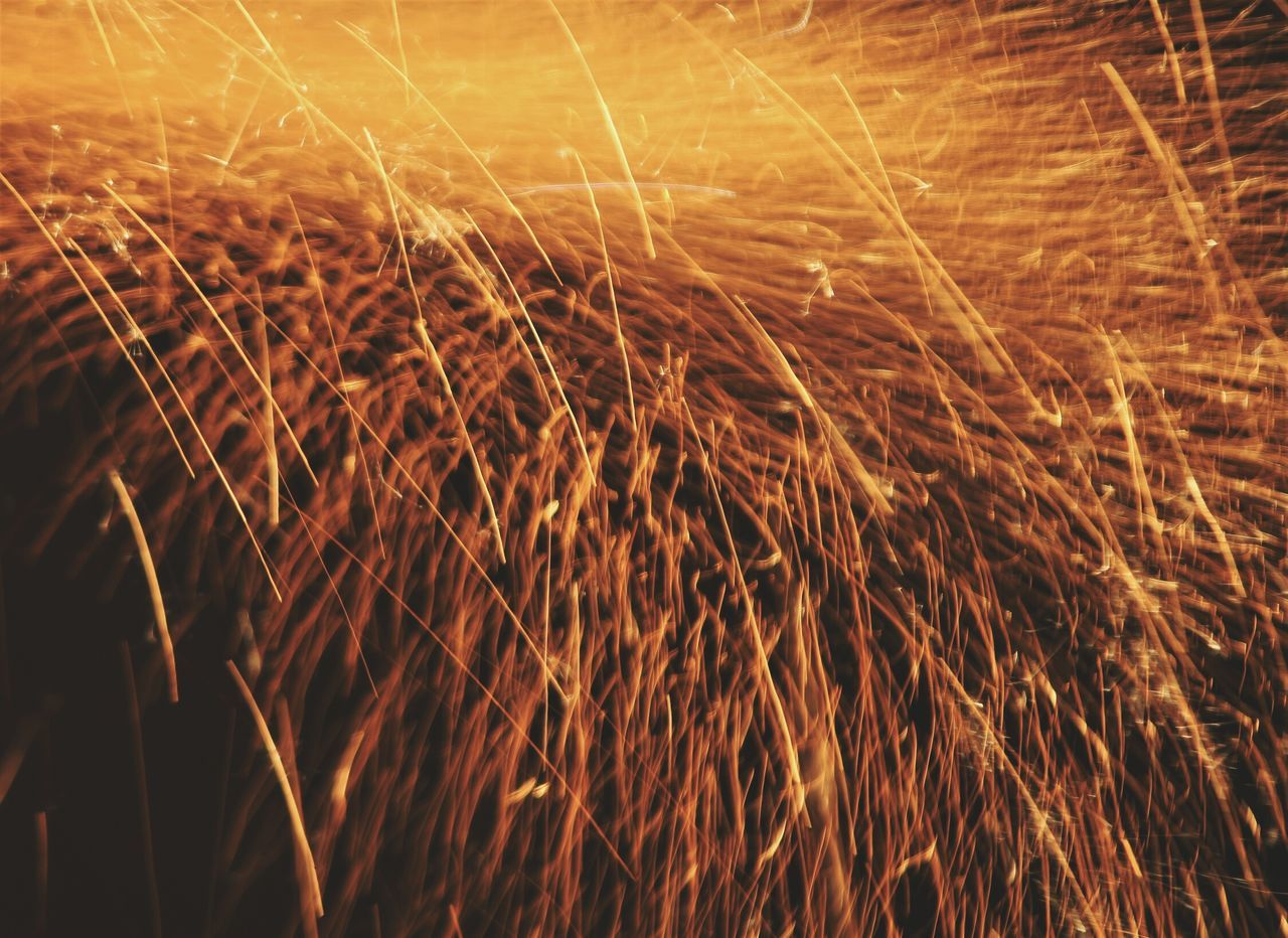night, no people, outdoors, field, long exposure, growth, motion, nature, close-up