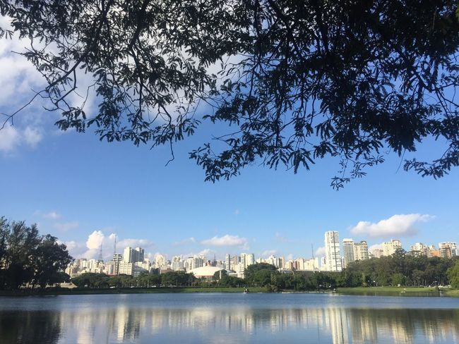 Parque Ibirapuera! Park Water Reflection Building Exterior Sky Cityscape Urban Skyline Architecture Tree Built Structure Skyscraper City Waterfront Cloud - Sky Growth Day River Outdoors Branch Travel Destinations No People First Eyeem Photo