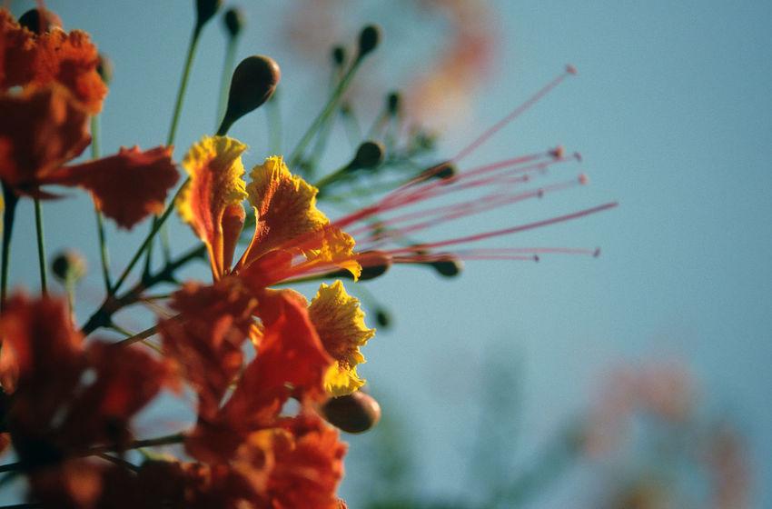 Amazon Amazon Flowers Amazon Nature Blossoms  Blüten Flower Flowers Flowers Blue Sky Gelbe Blumen🌾 Gelbe Blüten🌾 Orange Blossoms Orange Blumen Red Blossoms Red Flowers Red Orange Yellow Red Yellow Flowers Rote Blumen Rote Blüten Tropical Flowers Yellow Blossoms Yellow Flowers