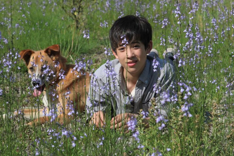 Portrait of boy with dog lying by blooming flowers