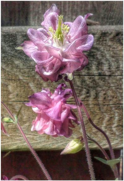 Overlooked beauty! Clover Flower