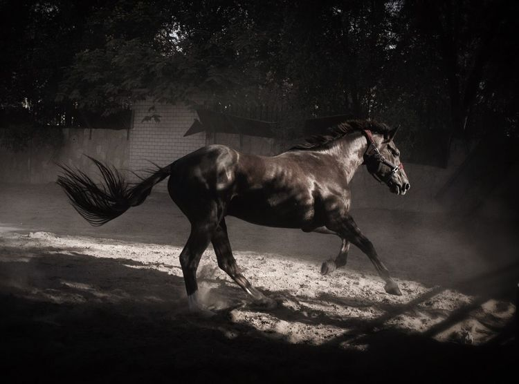 Horse Beautiful Nature Movement Freedom Muscat , Oman Visit Oman Hidden Gems  Fine Art Photography