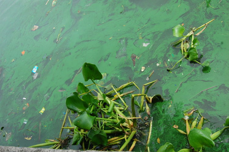 Color Palette Pollution Knows No Color Polluted River Eyeem Philippines Newbie Waterways River Lily Flower Waterlily Ew Green Rivers Pasig River Plastics Ice Age