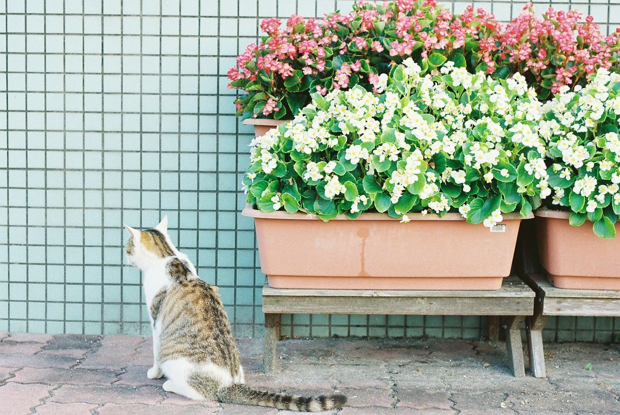 Cat sitting by potted plants by yard