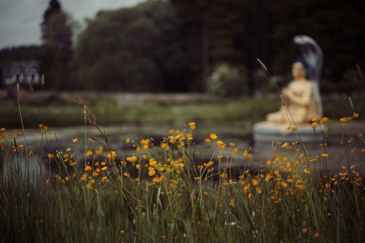 Close-up of flowers growing on field with buddha statue in background