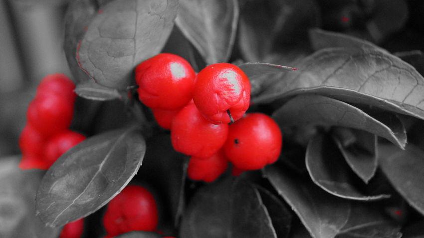 Close-up Flower Foto Fotografia Fotografie Fotography Freshness Grey Photo Photographer Photography Photooftheday Red Style