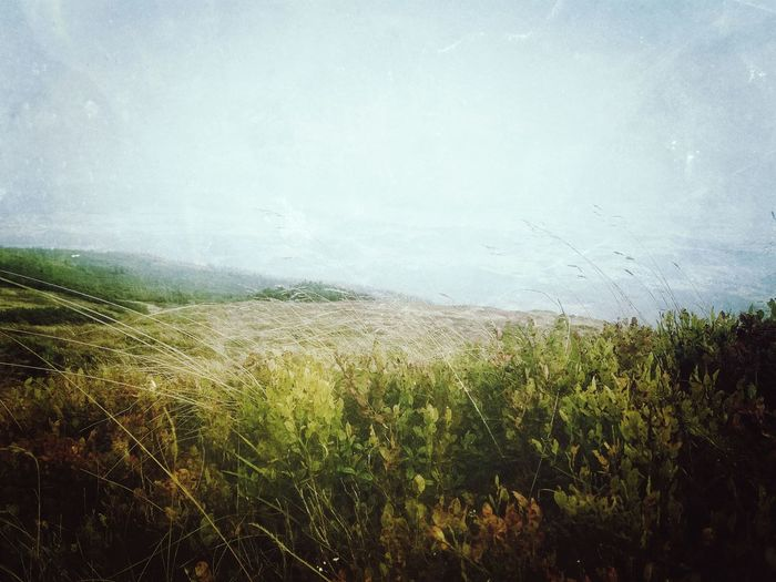 Nature Agriculture Grass No People Growth Day Outdoors Beauty In Nature Rural Scene Landscape Nature PhonePhotography