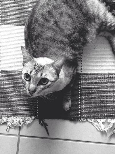 Gatos Cats Photo Photografy EyeEm Best Shots EyeEm Gallery Natureza Felinos Charme Carinho Amor Curandeiro Amigo Bichos Pets Home Goiânia Artpics