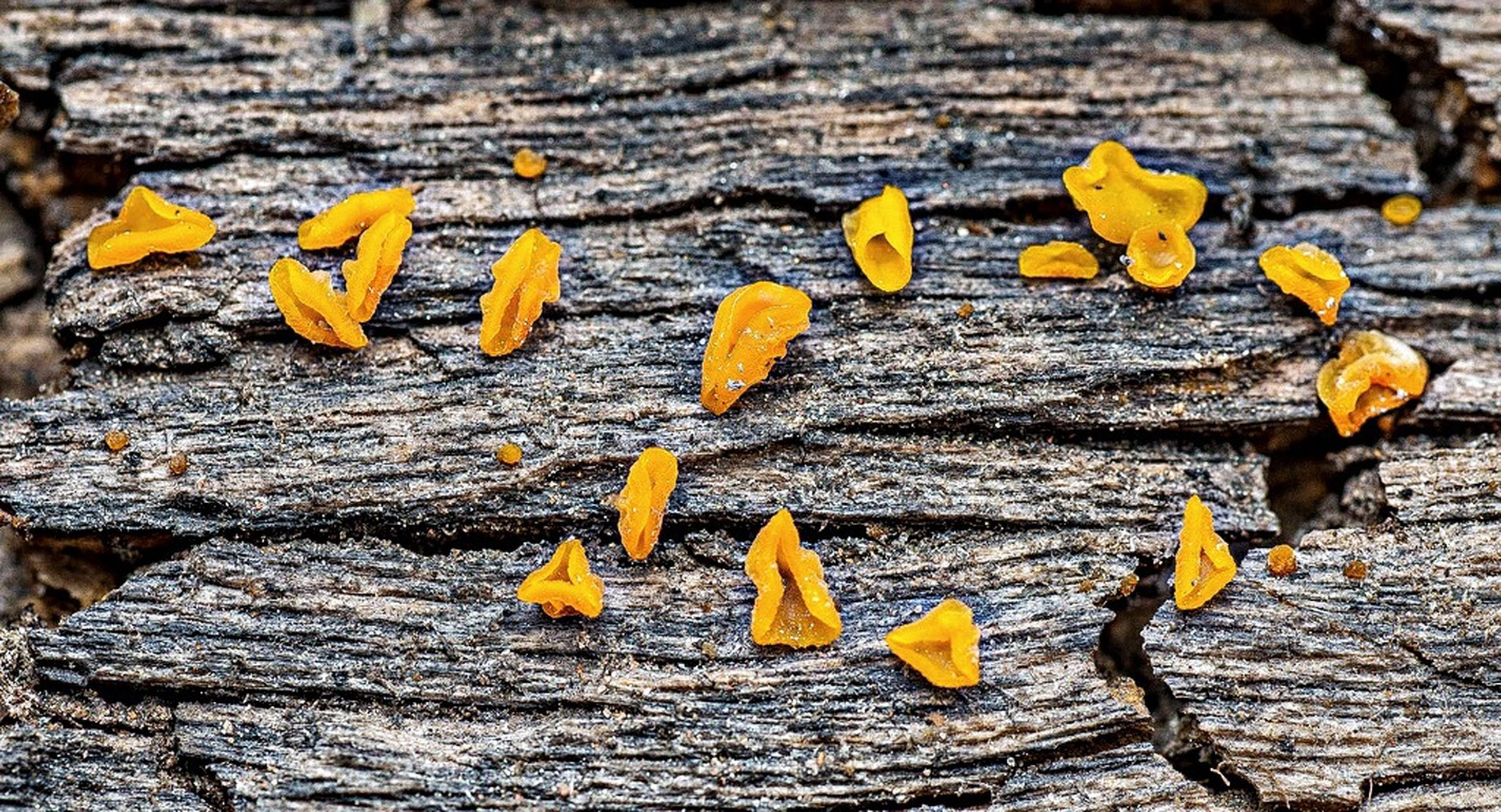 yellow, tree trunk, textured, nature, close-up, growth, rough, tree, bark, day, beauty in nature, natural pattern, outdoors, no people, flower, fragility, focus on foreground, wood - material, abundance, full frame