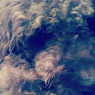 Rover the Monster Labradoodle Taking Photos Check This Out Dog❤ Enjoying Life Photography Cheese!