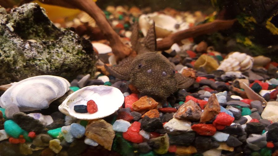 Aqua Animal Themes First Eyeem Photo Pet Portraits