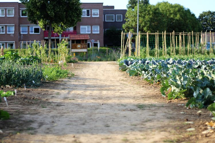 Beauty In Nature Belevingstuin D'r Moostuin Berg En Terblijt Biological Community Garden Courgette Soup Garden Garden Photography Growth Nature Nature_collection Outdoor Cooking Outdoor Photography Outdoors Soup Summer Sunset Vegetable Vegetables Walking Around Taking Pictures