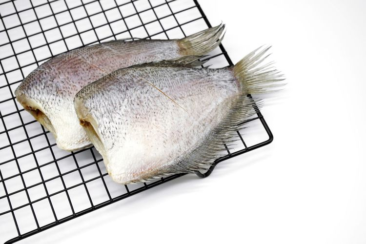 High angle view of fish against white background