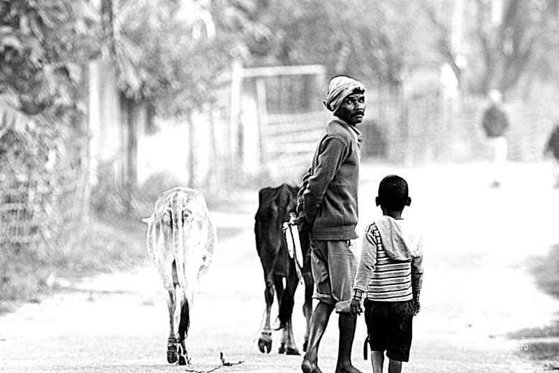 To the grazing site, Assam - India Taking Photos Hello World Black And White Black And White Photography Portrait Black And White Blackandwhite Photography