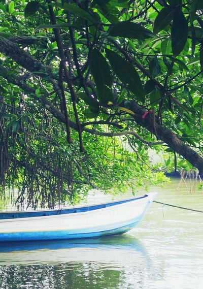 Serenity Boats Boating SriLanka Srilankatravel Beautiful Nature Green River River View Tranquility Canoe Tree Tranquil Scene Water Green Color Riverbank Scenics Outdoors Waterfront Beauty In Nature Tree Transportation Tree Trunk Branch Mode Of Transport