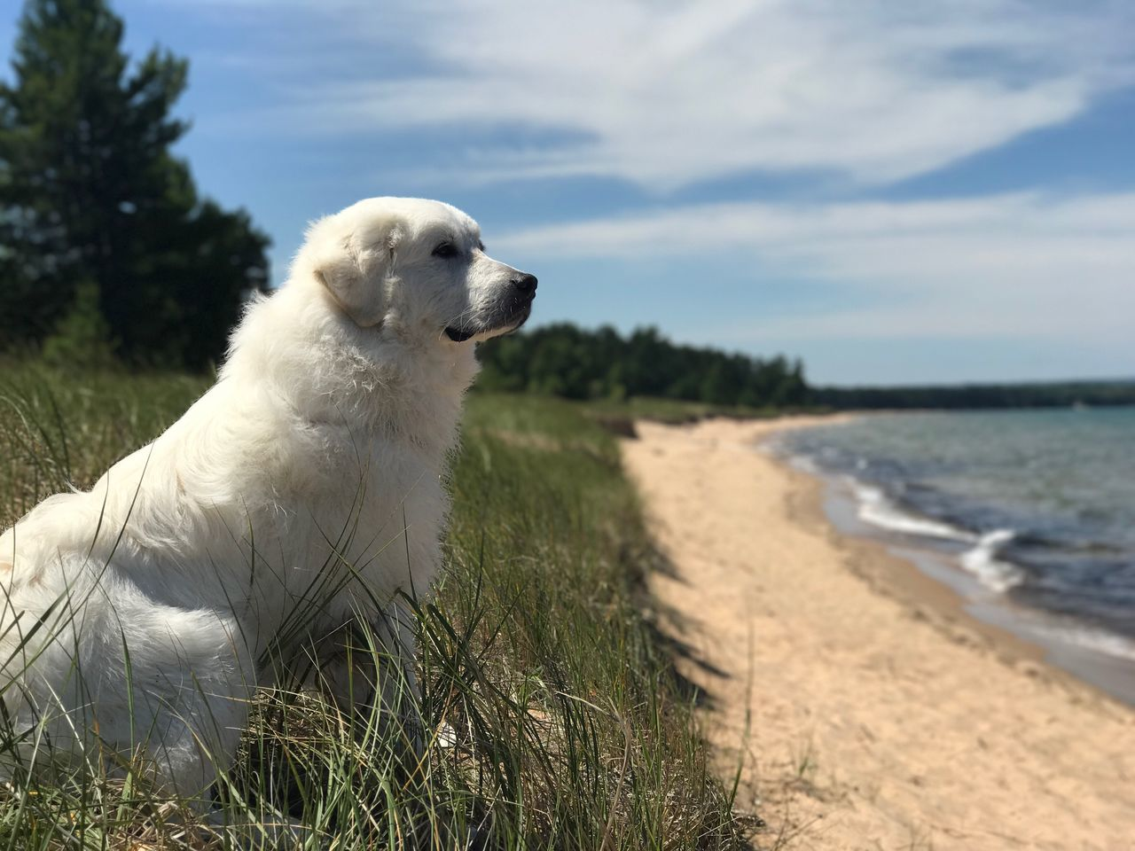 dog, pets, one animal, domestic animals, mammal, animal themes, golden retriever, outdoors, nature, day, sky, grass, no people, labrador retriever, water, beauty in nature