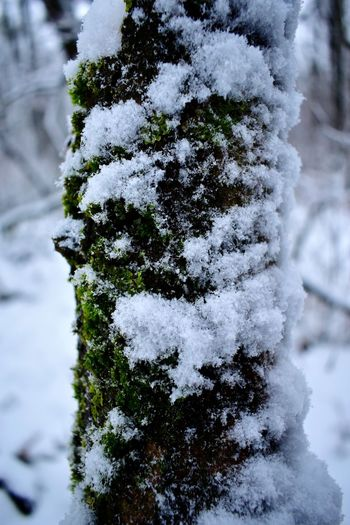 Close-up of frozen tree on field