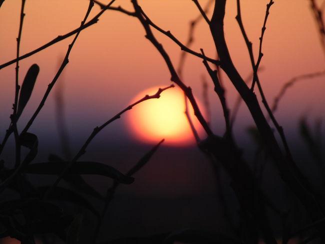 Backtowinter Nature Photography Naturephotography Naturelovers Sunnyday Sunset Portugal Algarve