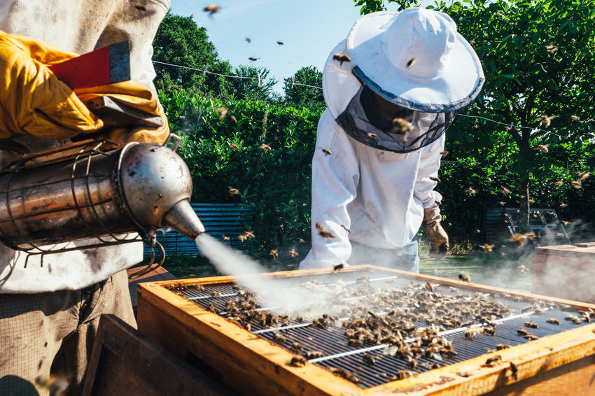 Smoker Occupation Beekeeper Healthy Hive Bee Beehive Colony Pollen Honey Bee Beekeeping Agriculture Extraction Production Bees Keeping Honey Honey Production Honeycomb Food Bees Insect Organic Beeswax Real People Apiary Small Business Heroes