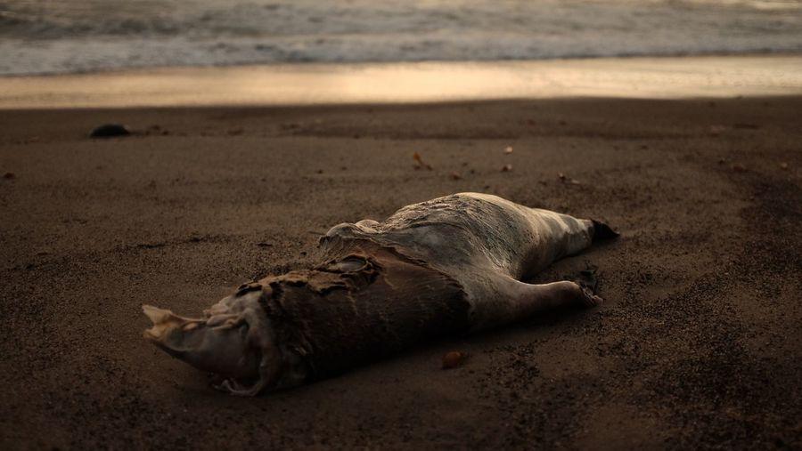 """Death On The Beach"" California 2017 Death And Life Death Animal #California Coast Ocean EyeEmNewHere Fuji"