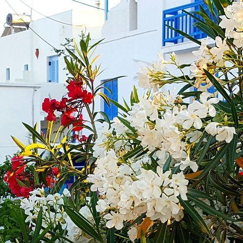 Love Greece 😊