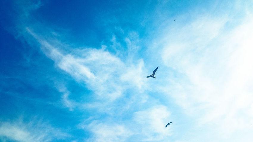 Flying Blue Sky Animal Themes Seagull Seagulls Clouds Cloud - Sky Deep Blue Freedom EyeEm Best Shots Eye4photography  EyeEm Best Edits EyeEm Gallery