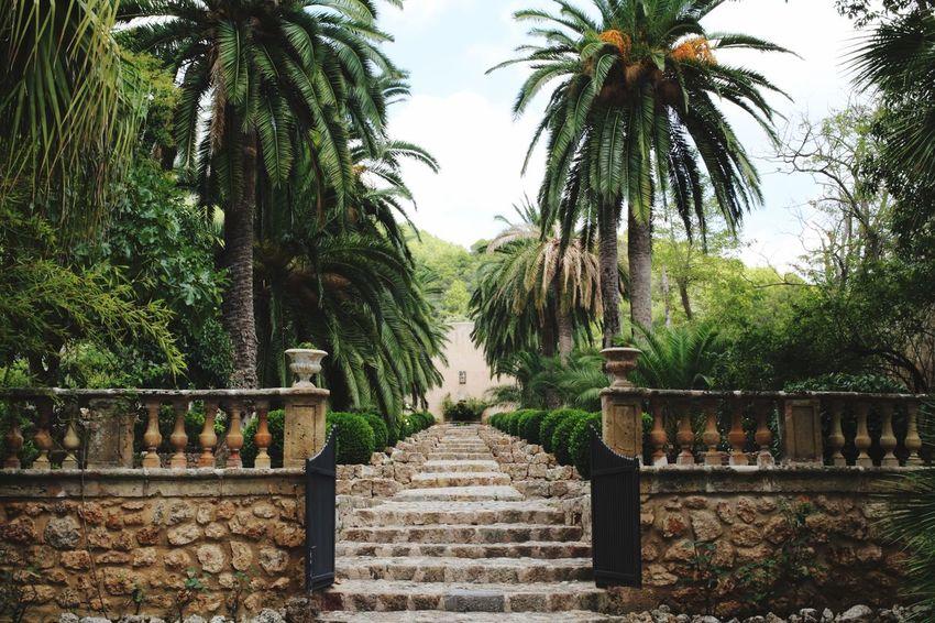 Moorish Moorish Architecture Luxury Gardens Entrance Tree Plant Growth Nature No People Day Railing