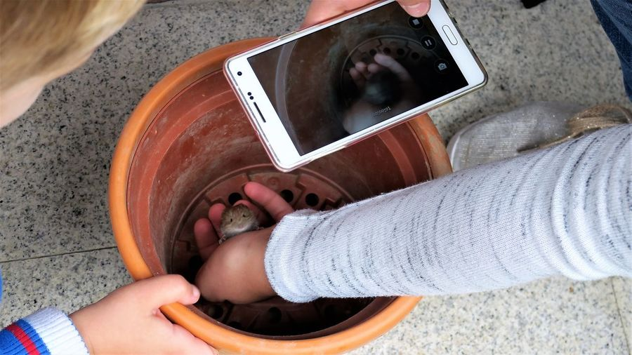 Low Section Of Boy Photographing Rat In Container