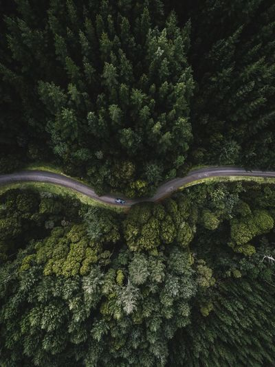 Aerial view of road in forest