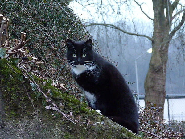 Animal Themes Black Color Day Domestic Animals Domestic Cat Feline Grass Mammal Nature No People One Animal Outdoors Pets Tree