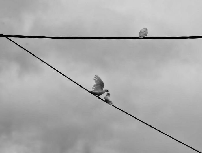 Bird perching on power line against sky