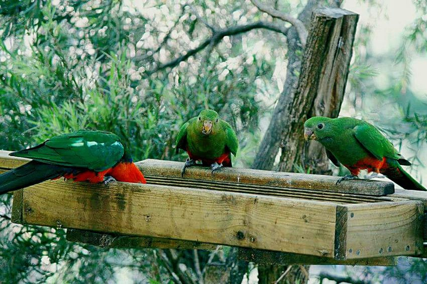 Taking Photos Countryside Life Parrot Feeding The Birds Beauty In Nature Tropical Climate Love Love Love.♥♥♥