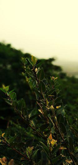 Bokeh Photography Tender Leaf Sunrise_Collection Light Exposure Sunlight Leaf Close-up Sky Plant Green Color