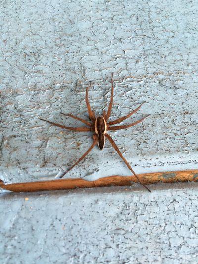 Arachnid One