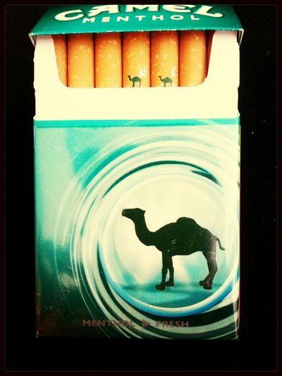 Camel Click