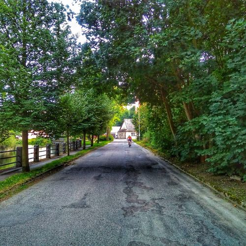 Streetphotography Photomoment Sidewalk Alley Scenery Way Cykling Cyklista Tree Green Color