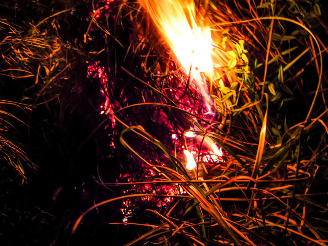 Glowing Night Long Exposure Illuminated No People Burning Outdoors Close-up Hot Grass Fire Fire At Night Black Sky Dark Background Burning Flame Outdoor Fire Wildfire Field Inferno Flame Burning Destruction Exploding Smoke - Physical Structure Heat - Temperature Motion