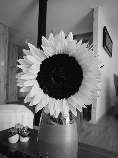 Flower Vase Yellow Table Indoors  No People Springtime Freshness Multi Colored Flower Head Day Fragility Close-up Welcome To Black Plant Blackandwhite Photography Black And White Collection  Black And White Collection  Black And White Collection  Black & White Art Is Everywhere The Great Outdoors - 2017 EyeEm Awards