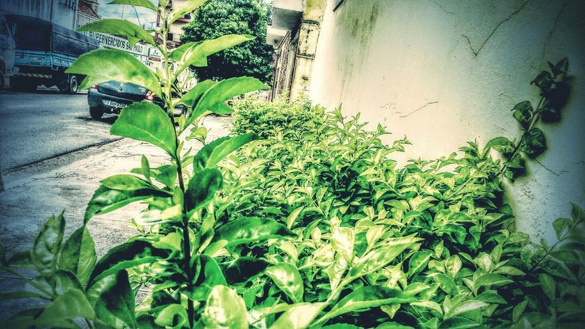 Green Green Green Green!  Green Leaves Plants Street Photography Beautiful Nature Nature Everywhere Fresh Bread