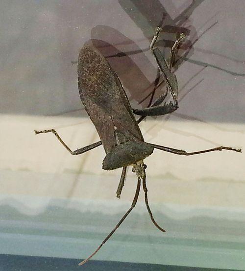 Big Bug Scary