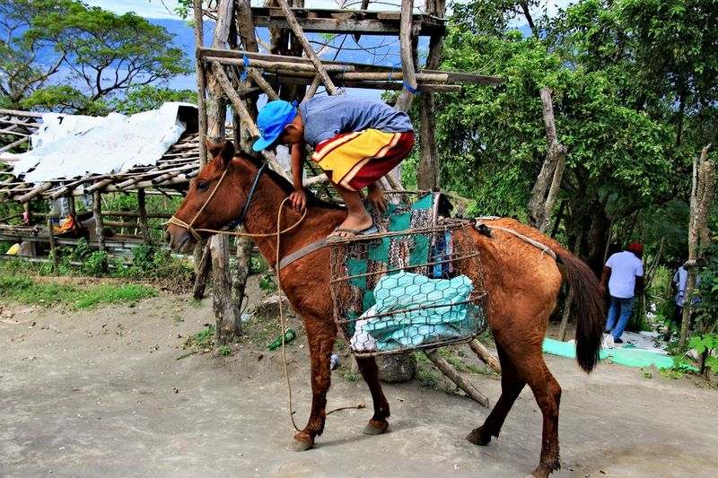 Animal Themes Domestic Animals Donkey Herbivorous Horse Kid Outdoors Riding Saddle Tree Working Animal Child Travel Travel Destinations Travel Photography Street Photography Connected By Travel An Eye For Travel This Is My Skin The Traveler - 2018 EyeEm Awards
