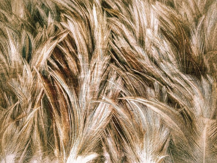 Feather  Feathers Feather Collection Nature Abstract Abstract Art Nature Art Nature Art Photography Imagination Imagination Photography Imagination Collection Close Up Close Up Photography Feathers Of Chicken Feather Art Feather Color Colorful Feather