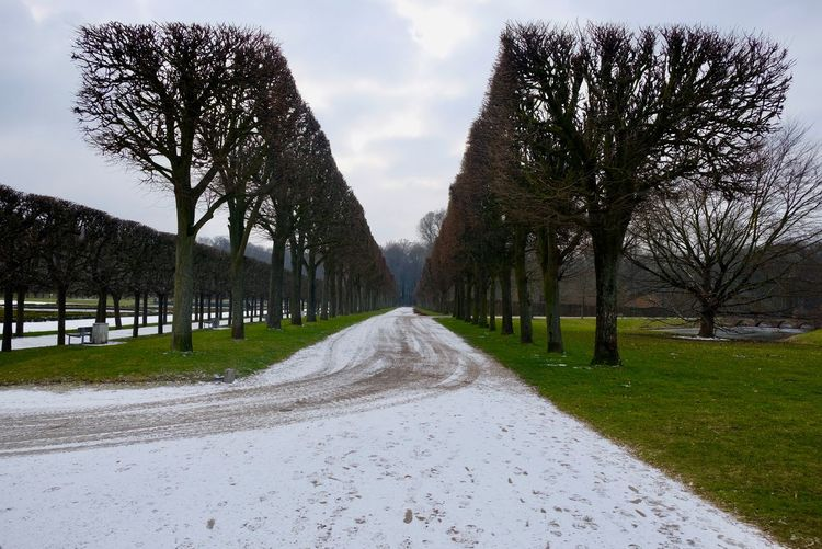 Light Snow Tree Schloss Augustusburg In Brühl The Way Forward Sky Tree Outdoors Day Cloud - Sky No People Nature Bare Tree Road Grass
