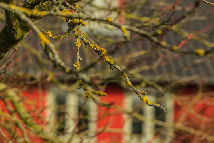 Germany House Village Village Life Tree Branch Branches Spring Blooming Red House Red Ziseetheworld
