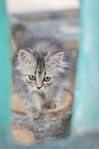 Close-up portrait of a kitten