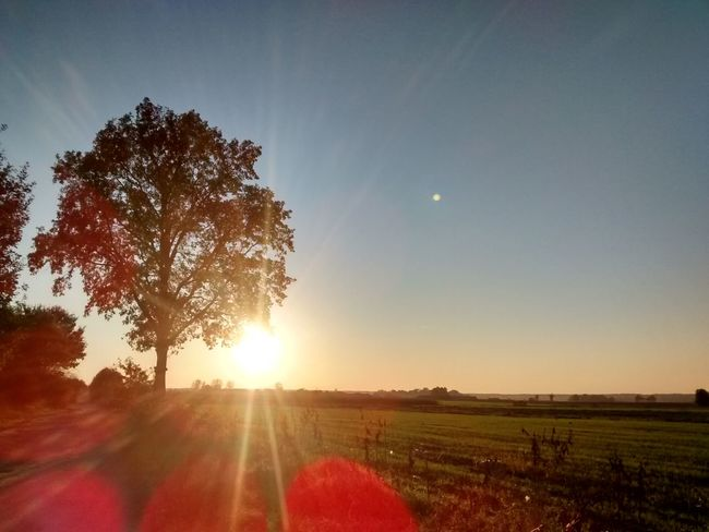 Countryside Sun Sky Nature Landscape_Collection Landscape EyeEm Nature Lover Nature_collection Beauty Tree