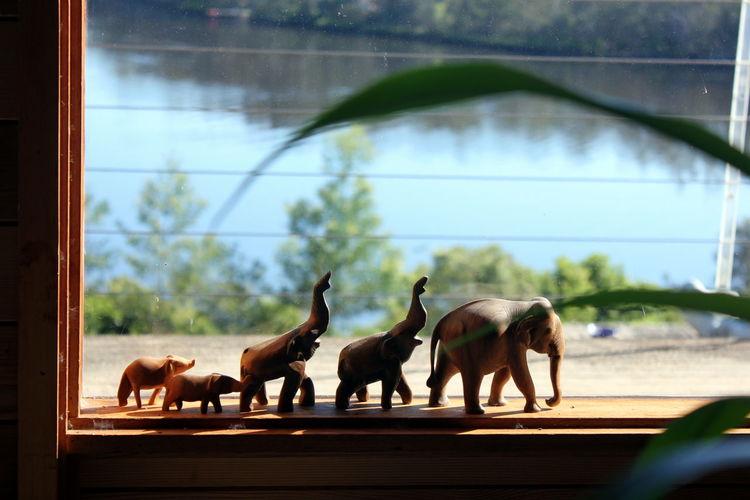 Elephant figurines on window sill against lake