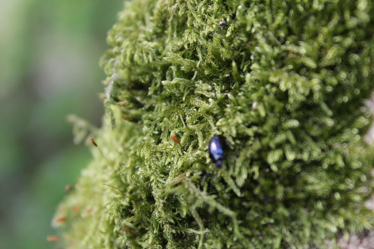 Tiny life Small