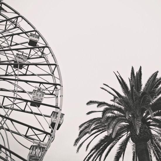 Date palm tree by ferris wheel against clear sky