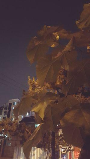 Night City Tree Sky No People at night